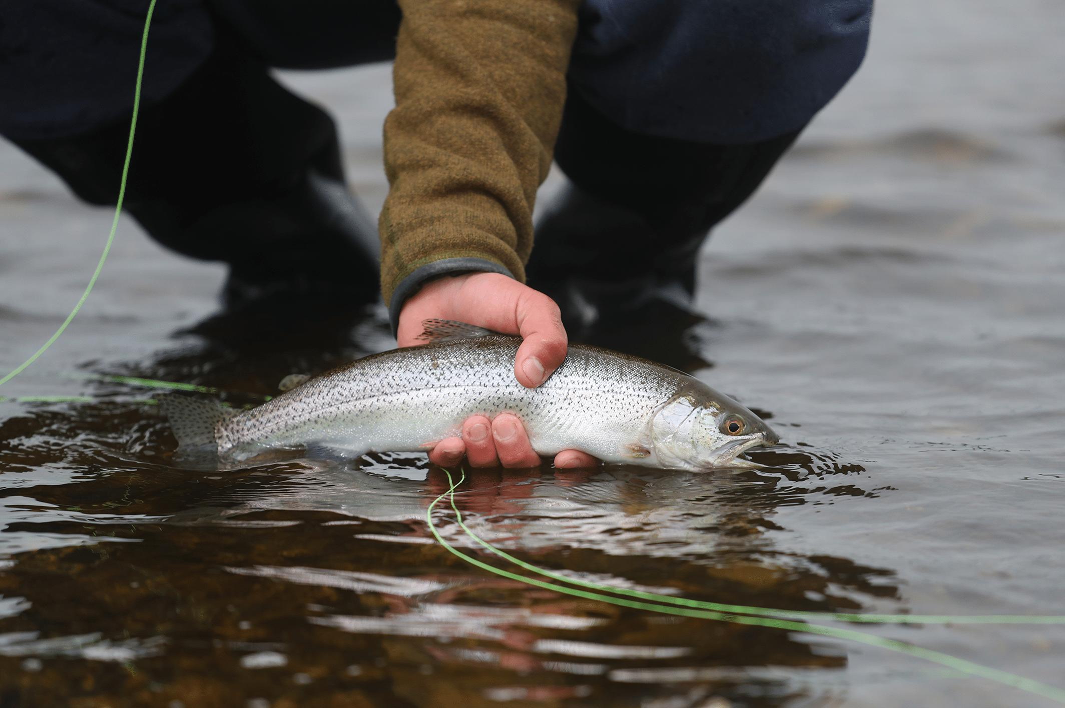 Haida Gwaii Freshwater Fishing 3