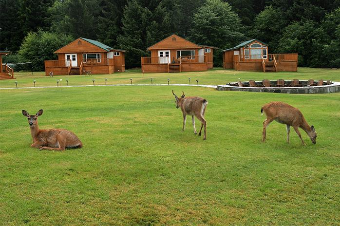 Peregrine Lodge Cabin 4